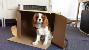 Bürohund Lila